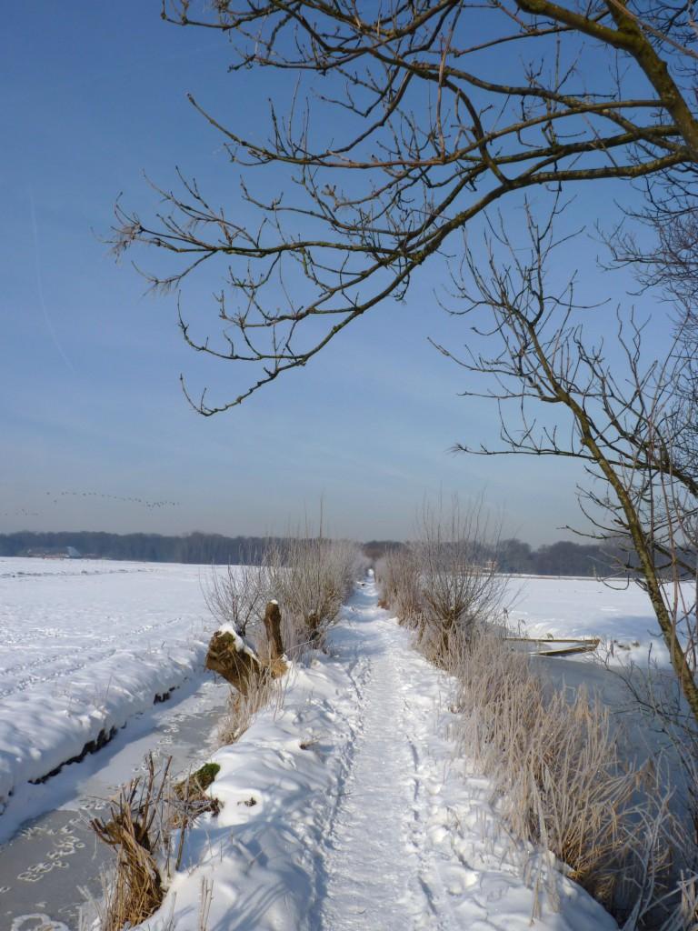 De Horsten - jan 2013