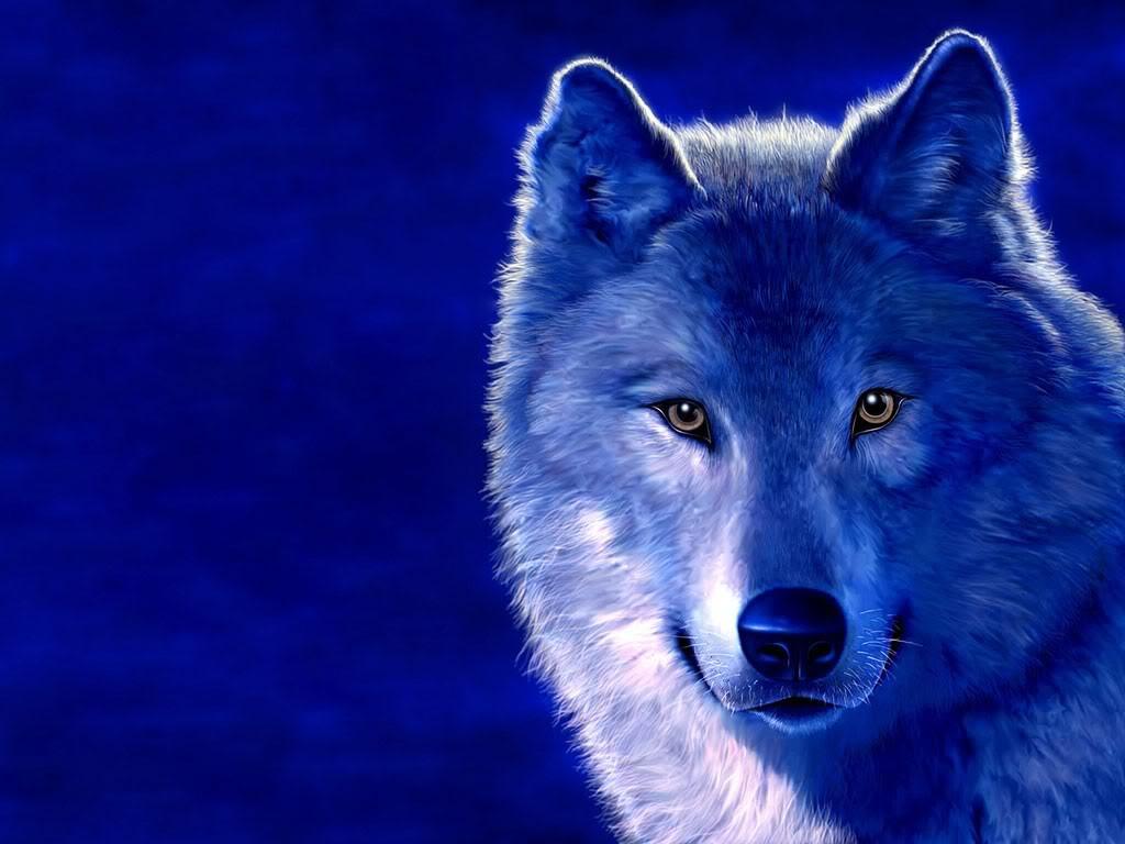 witte wolf-2